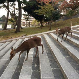 2016年11月鹿さんの出勤