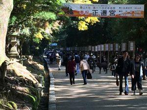 2016年11月春日大社参道