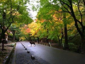 2016年11月 紅葉と鹿