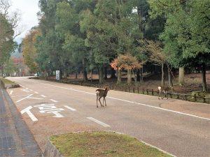 鹿さんの道路横断