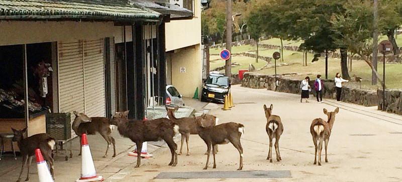 お店の前で並ぶ鹿さん