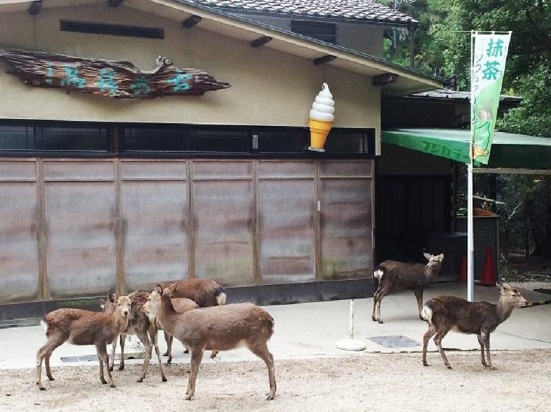 お店の前でたむろする鹿さん