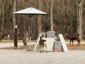鹿せんべいと鹿さん