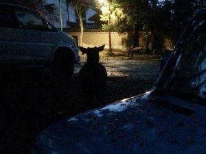 暗闇の中の鹿