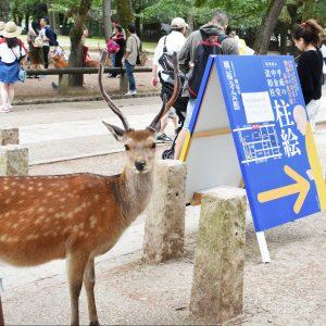 柱絵の看板と鹿